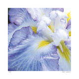 Iris Study 2 Limited Edition by Stacy Bass