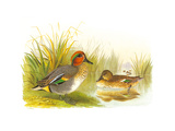 Ducks II Premium Giclee Print by Henry Jones