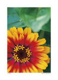 Flower Study Giclee Print by Stacy Bass