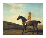 Rosaletta Premium Giclee Print by George Stubbs
