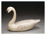 Charles Birch Swan Prints by Robert Shaw