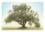 Oak & Blue Sky Prints by William Guion
