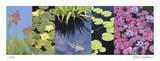 Koi Pond Giclee Print by Lois Bender