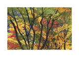 Fall Foliage Limited Edition by Donald Paulson