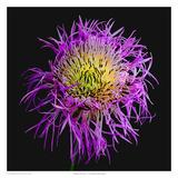 Basket Flower Prints by Richard Reynolds