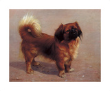 Small Dog Premium Giclee Print by Charles Spencelayh
