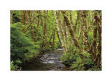 Forest Stream II Giclee Print by Donald Paulson