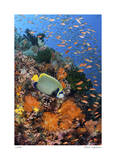 Reef Scenic 8 Giclee Print by  Jones-Shimlock