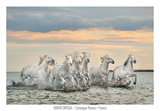 Camargue Horses - France Prints by Xavier Ortega