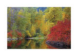 Nason Creek I Giclee Print by Donald Paulson