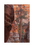 Zion Park Canyon Limited Edition by Donald Paulson