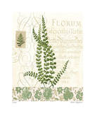 British Fern IV Limited Edition by Paula Scaletta