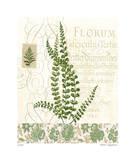 British Fern IV Giclee Print by Paula Scaletta