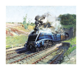Mallard Premium Giclee Print by Terence Cuneo
