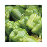 Green Peppers Giclee Print by Stacy Bass