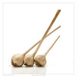 Rocambole Garlic Print by David Wagner