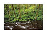 Forest Stream IV Giclee Print by Donald Paulson