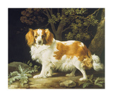 King Charles Spaniel Premium Giclee Print by George Stubbs