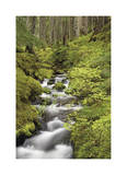 Forest Stream I Giclee Print by Donald Paulson