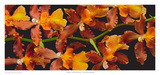Orchid - Kilauea Karma Prints by Richard Reynolds