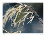 River Grasses II Limited Edition by Joy Doherty