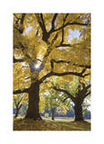 Stewart Park Walnut Trees III Limited Edition by Donald Paulson