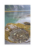 Endicott Arm Tide Pool Giclee Print by Donald Paulson
