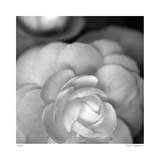 Botanical Study 20 Limited Edition by Stacy Bass