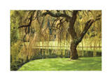 Bainbridge Island Willow Giclee Print by Donald Paulson