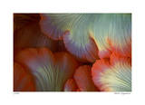 Sea Anemone Giclee Print by  Jones-Shimlock
