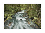 Cascade River North Fork Giclee Print by Donald Paulson