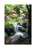Peaceful Waterfall I Giclee Print by Joy Doherty