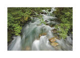 Cascade River Giclee Print by Donald Paulson