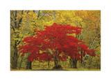 Cascade Mountains Fall Colors Limitierte Auflage von Donald Paulson