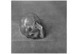 """Albrecht Durer (Study on the """"St. Jerome """": skull) Art Poster Print Posters"""