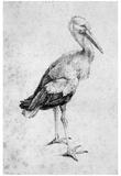 Albrecht Durer (Storch) Art Poster Print Print