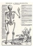 Jost de Negker (Anatomical boards of Jan van Calcar, Sheet 6: skeleton, back view) Art Poster Print Prints