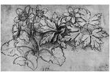 Leonardo da Vinci (Blooming anemones) Art Poster Print Prints