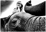 Circus Elephant Close Up Archival Photo Poster Posters