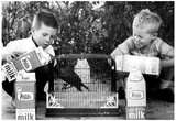 Boys and Pet Crow Archival Photo Poster Posters