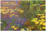 Claude Monet (Nymphéas (water lily)) Art Poster Print Posters