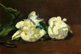 Edourard Manet Still Life White Peony Art Print Poster Masterprint