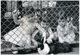 Kids Petting Rabbits Archival Photo Poster Print Posters