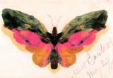 Albert Bierstadt Butterfly Art Print Poster Masterprint