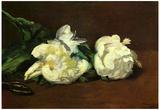 Edourard Manet Still Life White Peony Art Print Poster Láminas