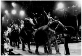 Circus Elephant Riders Archival Photo Poster Prints