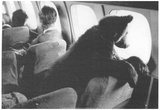 Bear on Plane 1987 Archival Photo Poster Print