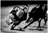 Dog Racing at Derby Lane 1989 Archival Photo Poster Prints