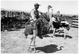 Man Riding Ostrich Archival Photo Poster Prints