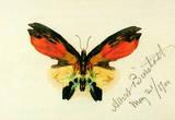 Albert Bierstadt Butterfly 2 Art Print Poster Masterprint